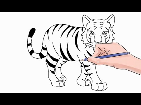 How To Draw A Tiger Easy Step By Step
