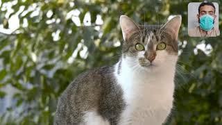 dog amazing friendship meeting new a cute cat3