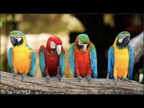 Cute Parrots Videos Compilation cute moment of the animals - Soo Cute! #7