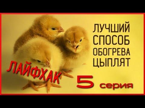 """Лайфхак: обогрев цыплят. Лучший способ. Сериал """"От яйца до яйца"""", серия 5"""