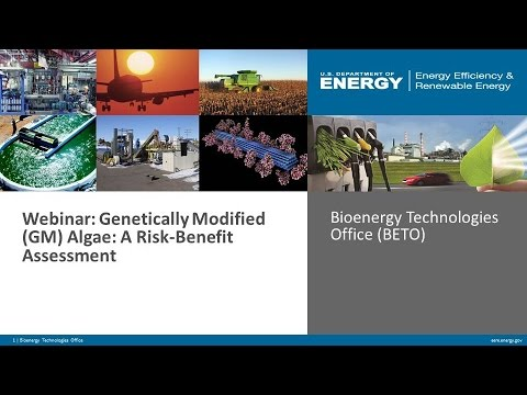 Genetically Modified Algae: A Risk-Benefit Assessment