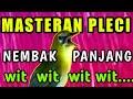 Masteran Pleci Nembak Panjang Wit Wit Wit Mempercepat Pleci Buka Paruh Dan Pleci Gacor  Mp3 - Mp4 Download