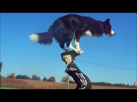Thumbnail: Nana the Border Collie Performs Amazing Dog Tricks