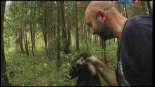 Рейтинг Баженова. Охота на енотовидную собаку.
