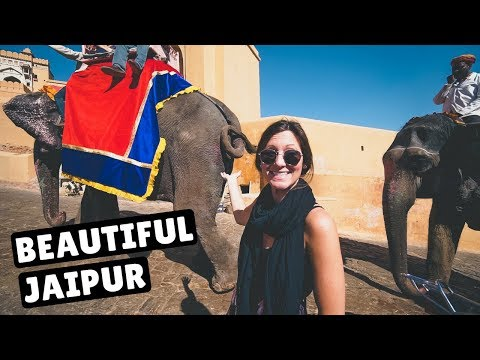 JAIPUR'S MONKEY TEMPLE & AMER FORT | India Travel Vlog