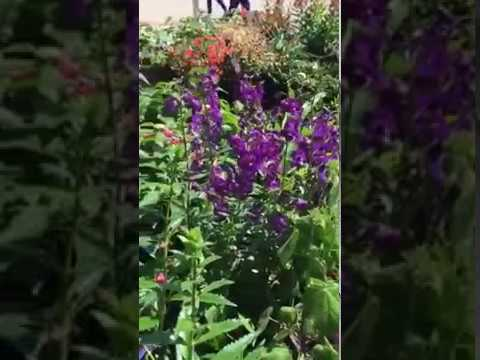 Pretty Flower To Grow For Summer Youtube