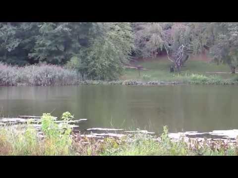 Swallows skim water surface making splash in Holmdel Park NJ