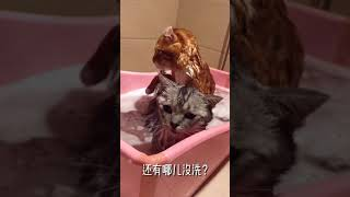 #153 [Cats and dogs funny family]The owner wants to eat dried cat meat? How horrible!
