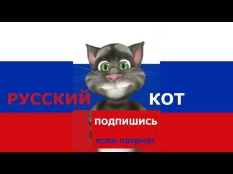 Установить Видео Приколы Коты на Андроид - YouTube