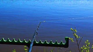 Ловля карася на фидер Рыбалка на карася в мае Сьёмка поклёвок крупным планом