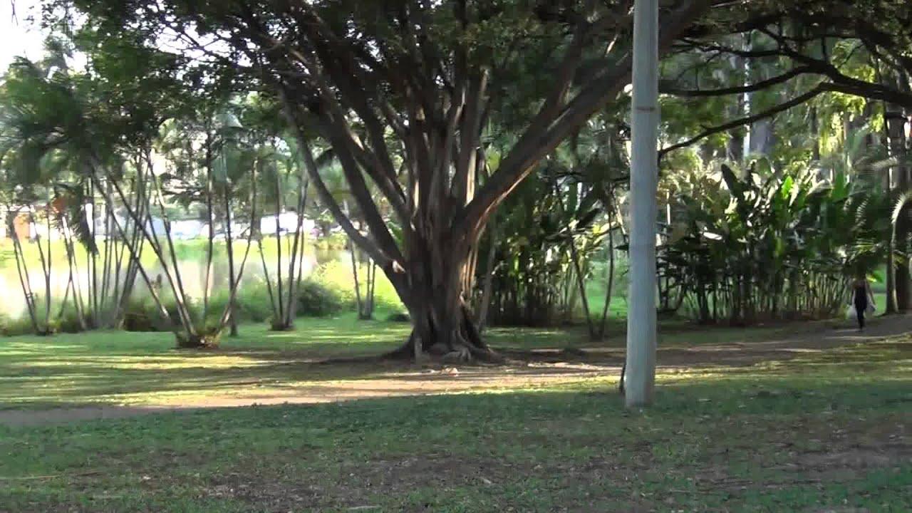 Cali mi cali bella parque lago de la babilla en ciudad for Lagos de jardin