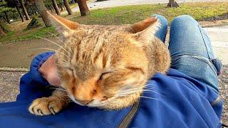 石段の上で寝ていた野良猫に近づいてナデナデしたら膝の上に乗ってきた