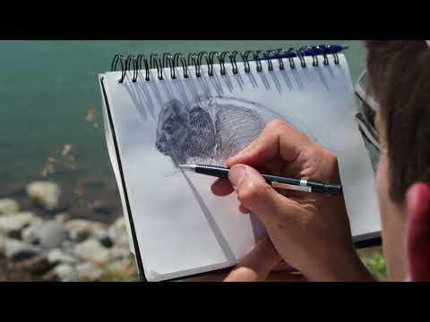 Sketching Yellowstone Bison