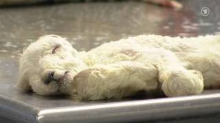 Schmallenberg-Virus - Neuartige Tierkrankheit bei Rindern, Schafen und Ziegen!!! (26.01.2012)
