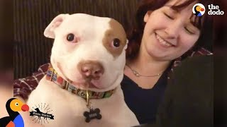 Pit Bull Dog Makes His Family Whole Again - BEAU | The Dodo Pittie Nation