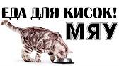 Цена не указана. Порода: курильский бобтейл. Отдам за цену кастрации кота курильского бобтейла бонифация. Коту будет 3 года. Неоднократный. Продам кота экзота. 1 500 руб. Чита. Сегодня 05:27. В избранное. Полосатик с добрые руки. Сегодня. 10 руб. Москва. Сегодня 05:23. В избранное.
