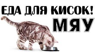 Чем нельзя кормить кошек и котят и как и чем правильно кормить котят и кошек?!!