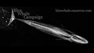 Blue Whale Campaign