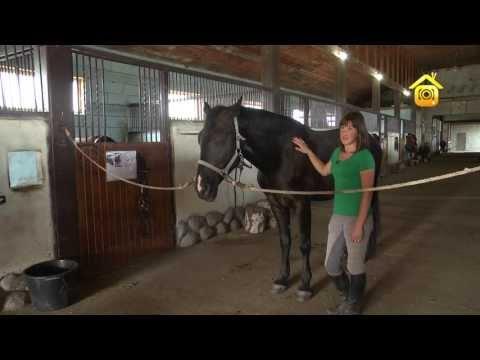 Как заботиться о лошади
