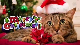 ニャンコ達が一生懸命にクリスマスを祝ってくれていますよ(笑) 可愛い衣...