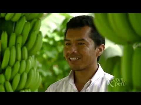Organics Products Export/Perú