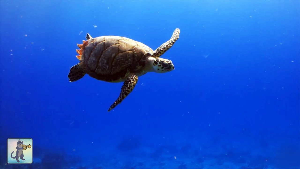 Underwater Marine Life: Sea Turtles, Coral Reef Fish ...