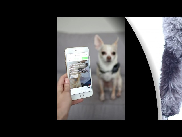 Jiobit Pet GPS Tracker size of pet tag