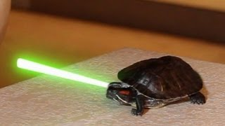 Living with Jedi Turtles (They sure love Pizza!)