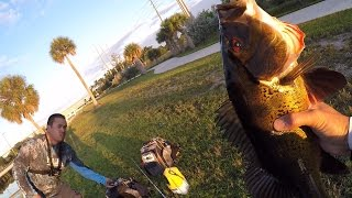 Peacock Bass And Gar On Poppers/shiners - Florida Canal Fishing 10/7/15