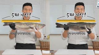 자연산 농어 vs 양식 농어 전격 비교! 농어회와 끝내…