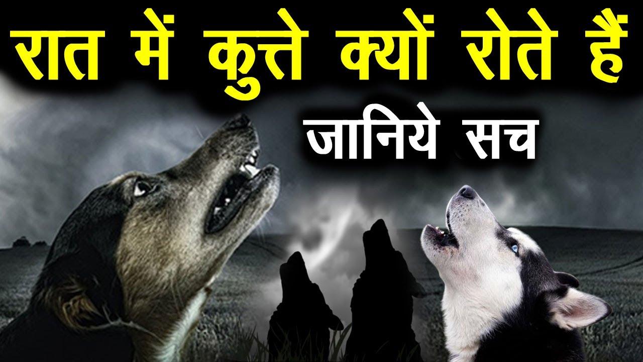 क्यूँ रोते हैं कुत्ते? क्या सच में उन्हें दिखता है भूत जानिए, Kya Hota Hai Jab kutta rota hai