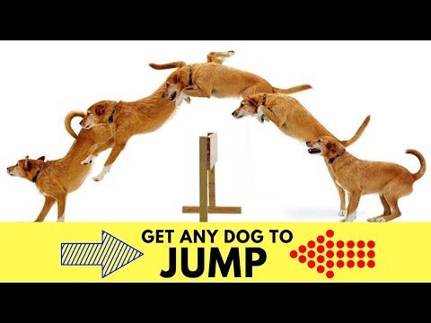 How To Train A Dog To Jump? Group Class Agility Training In Orange County With EPIC DOG PROS