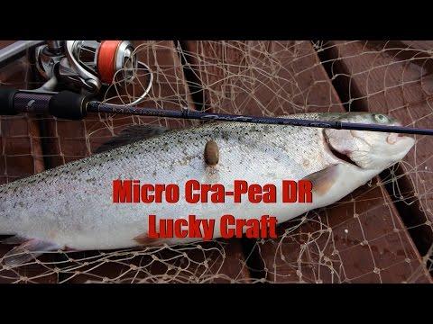 Особенности ловли прудовой форели на Micro Cra-Pea DR