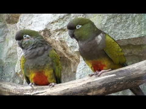 Pfeifen mit den lustigen Papageien die sich gerne haben Oster Samstag 2.4.2011
