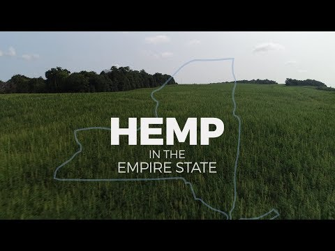 Industrial hemp: How marijuana's controversial cousin could benefit NY farmers (video)