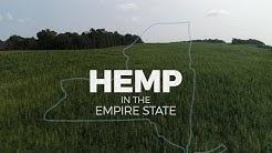 Hemp in NY: How marijuana's controversial cousin could benefit farmers