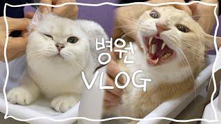 [동물병원 VLOG] 고양이 턱드름, 분변검사, 설사,…