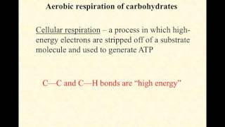 video lecture energy metabolism overview