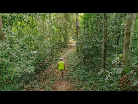 Download Harvesting Jungles: Can logging and jungle wildlife exist together?