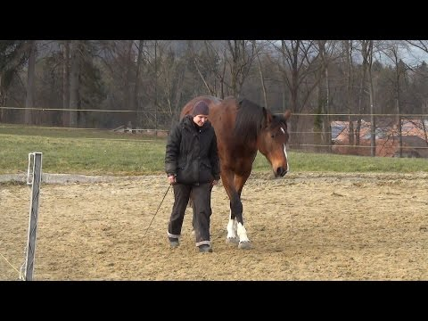 Bild: Tanzen mit meinem Pferd - Nothing Else Matters
