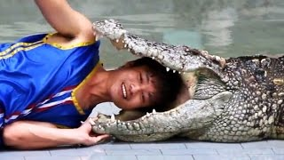 Crocodile Show in Thailand: This Man Stick His Head in Crocodile Mouth During The Show [HD]