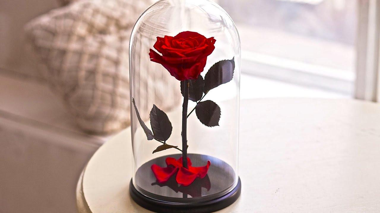 Trandafirul Vesnic