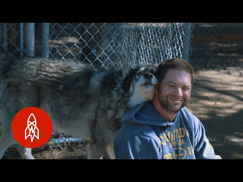 Living with Wolves Saved My Life
