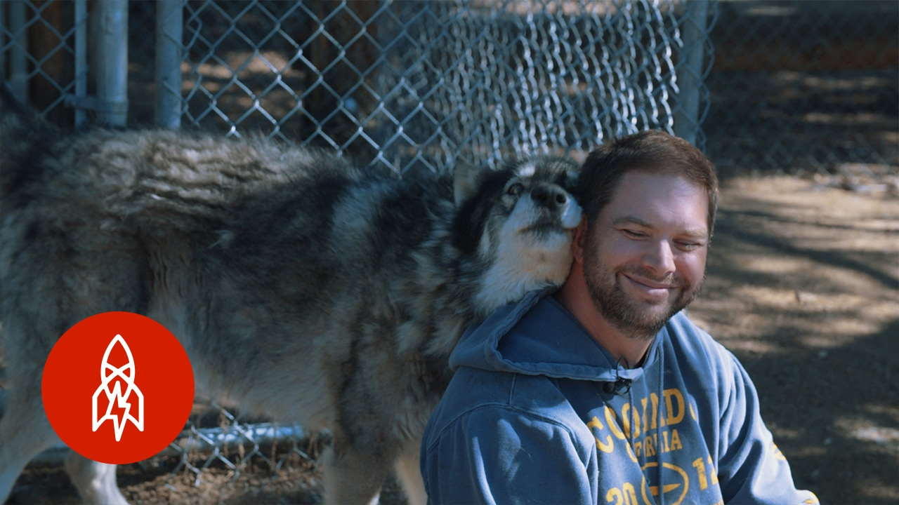 VETERANS Suffering from PTSD  ---Living with Wolves Saved My Life---