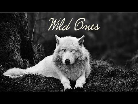 Wild Ones || Bahari