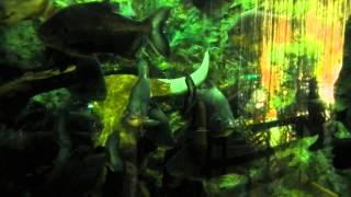 Manila Ocean Park - Piranhas