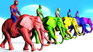 Colors Spiderman Riding Elephant Colours Cartoon For Kids - Learn Colors Fun Animals For Children