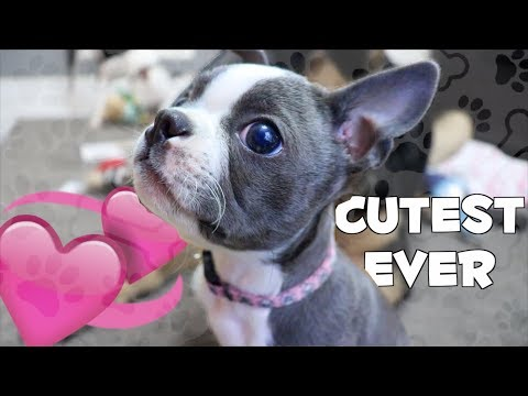 CUTEST UNBOXING EVER | March BarkBox 2018
