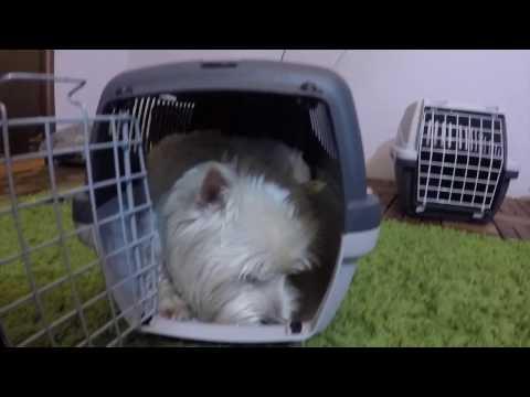Обзор переносок в самолет для собаки