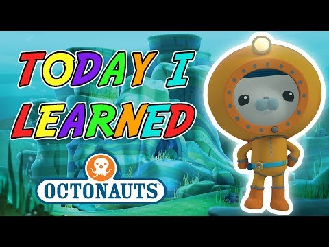 Octonauts - Today I Learned | New Underwater Creatures